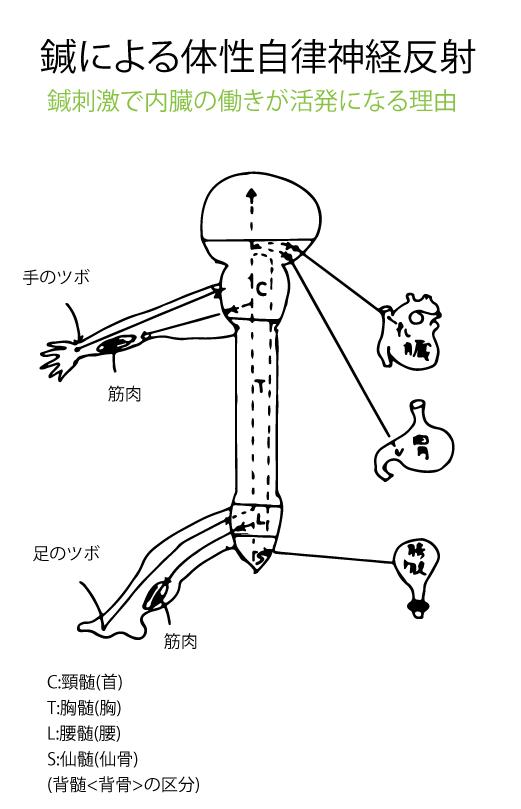 体性自律神経反射のシェーマ